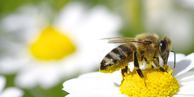 How to Get Lasting Allergy Relief